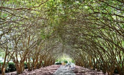 Must See Texas Tree Tunnels Near You: Take a Shaded Stroll Through Natural Beauty