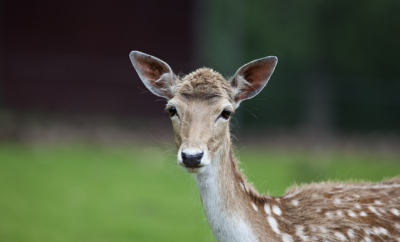 Chronic Wasting Disease Found in Kimble County Deer Breeding Facility