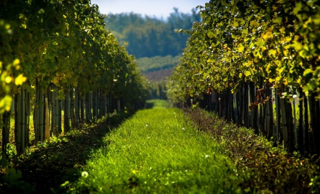 Wonderful Texas Hill Country Wineries Found Off the Beaten Trail