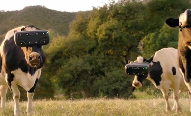Does Milk Production Improve in Cows Wearing Virtual Reality Headsets?