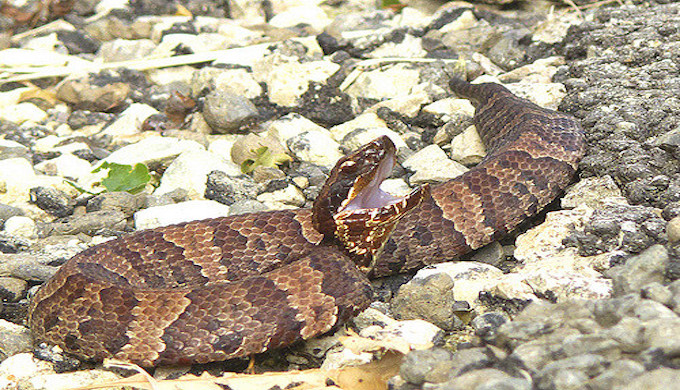 Snakes are on the Move in the Texas Hill Country