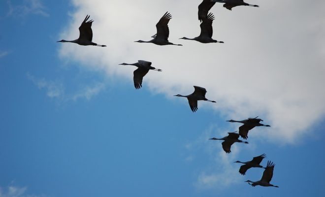 Aransas County is a Birdwatchers Paradise Along the Beautiful Coast