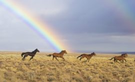 A Horse of a Different Color: Texas A&M Can Help Determine Equine Ancestry