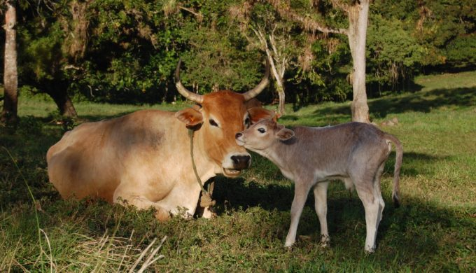Hunters Beware: Warnings of Bovine Tuberculosis in Wild Deer