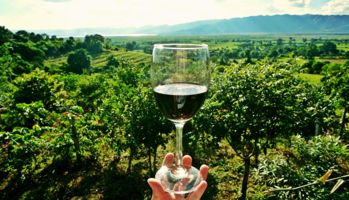wine glass vineyard
