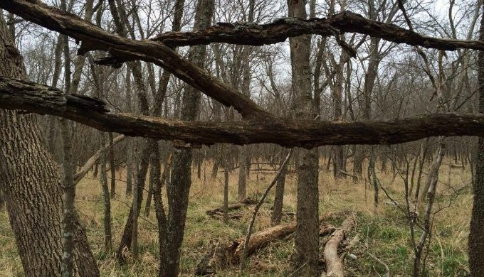 East Texas woods