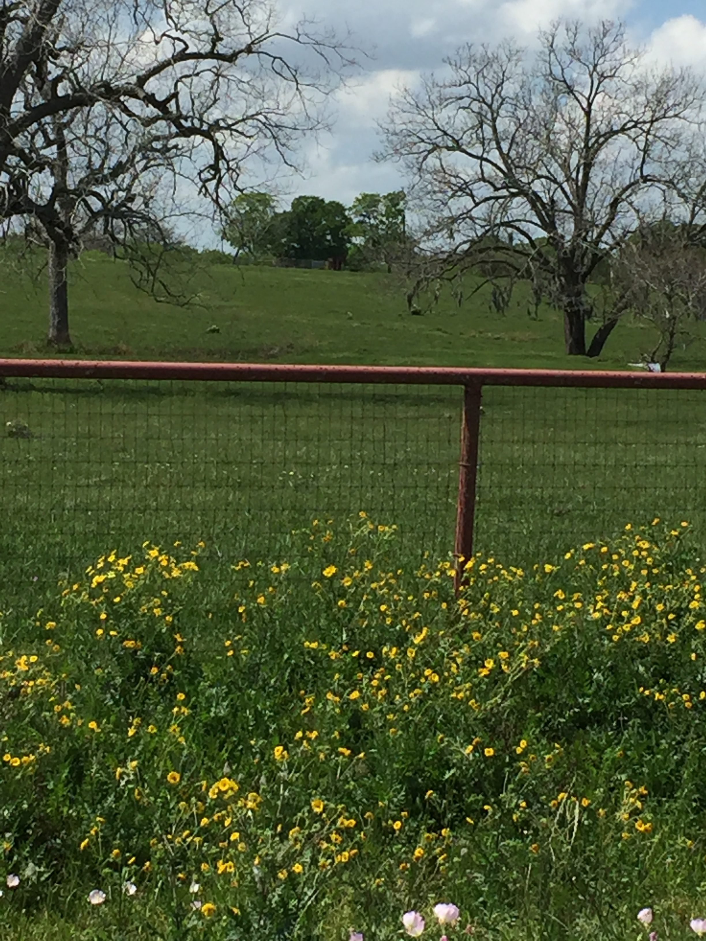 yellow black eyed susans and fence