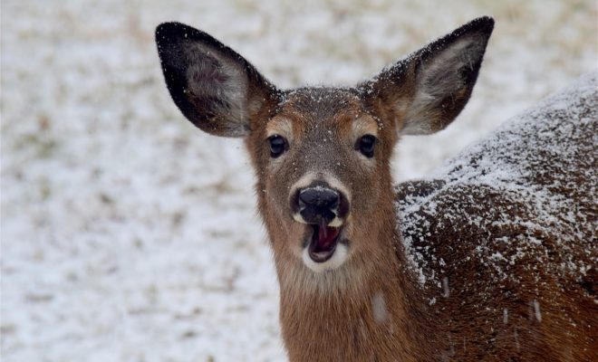 'Zombie Deer Disease' Reported in Texas: Could it Spread to Humans?