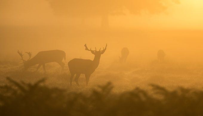 Zombie Deer Disease Reported in Texas: Could it Spread to Humans?