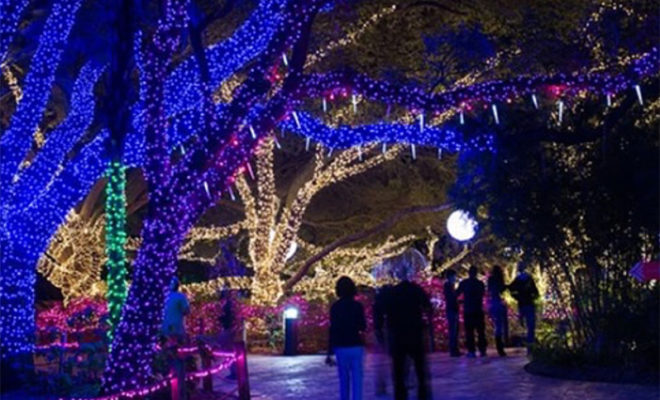 instagramhoustonzoo - Christmas Lights At The Zoo